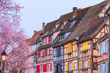 CLKFV86020 Colorful half timbered houses, Colmar, France