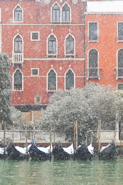 CLKDC83681 Some traditional venetian gondolas moored at Riva del Vin during a snowfall, Grand Canal, Venice, Veneto, Italy