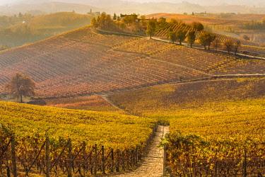 CLKFV88282 Italy, Piedmont, Cuneo District, Barolo, Langhe Barolo at sunrise