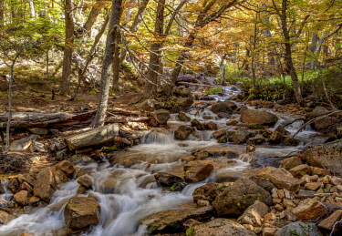 ARG2676AW Mountain Stream on the Trail to Refugio Frey, Nahuel Huapi National Park, Rio Negro Province, Argentina