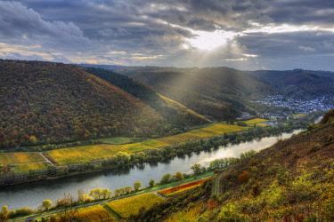 GER10867AWRF River Mosel with Sehl at fall, Rhineland-Palatinate, Germany
