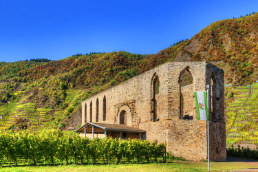 GER10816AW Ruin of Cloister Stuben with Calmont vineyard at fall, Bremm, Rhineland-Palatinate, Germany
