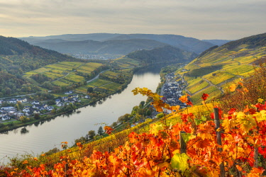 GER10824AW River Mosel with Zell-Merl at fall, Rhineland-Palatinate, Germany