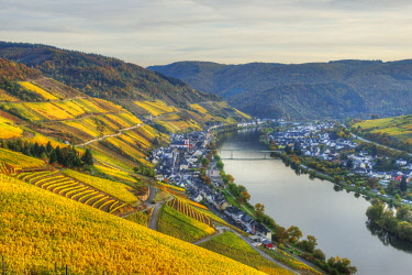 GER10825AW River Mosel with Zell at fall, Rhineland-Palatinate, Germany
