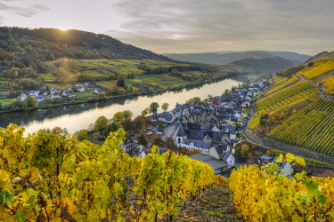 GER10826AW River Mosel with Zell-Merl at fall, Rhineland-Palatinate, Germany
