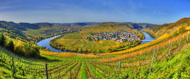 GER10829AW View at Trittenheim with river Mosel at fall, Rhineland-Palatine, Germany