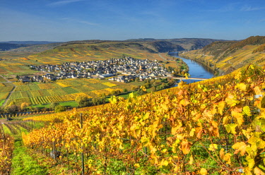 GER10830AW View at Trittenheim with river Mosel at fall, Rhineland-Palatine, Germany