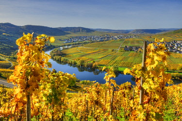 GER10831AW View at Trittenheim and Leiwen with river Mosel at fall, Rhineland-Palatine, Germany