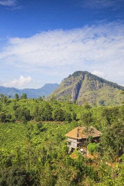 SL01220 Sri Lanka, Ella, 98 Acres Resort and Spa.