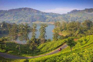SL01253 Sri Lanka, Hatton, View of tea estate and Castlereagh Lake