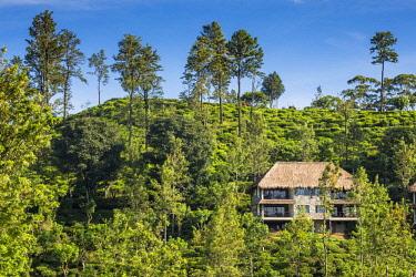 SL01264 Sri Lanka, Ella, 98 Acres Resort and Spa.