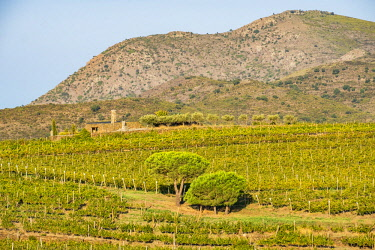 SPA8101 Vineyards of the Martin Faixo winery in the nature reserve of Cap de Creus in the north of the Costa Brava in the province of Girona in Catalonia Spain