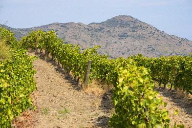 SPA8071 Landscape with vineyards in the l'Emporda region north of the Costa Brava in Catalonia Spain