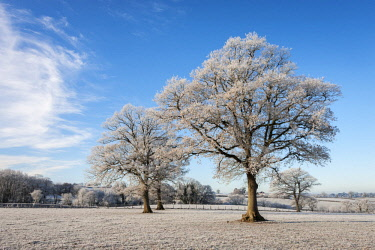 ENG15736AW Hoar frosted trees in countryside during cold winter snap, Devon, England.