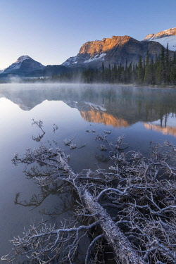 CAN3485AW Frost covered fallen tree in Banff National Park at sunrise, Canadian Rockies, Alberta, Canada. Autumn (October) 2017