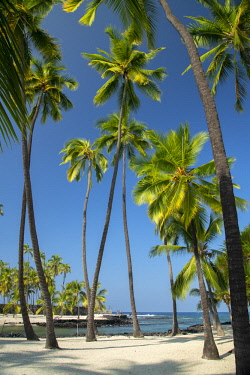 USA13622AW USA; Hawaii; Big Island, Pu'uhonua o Honaunau; National  Park; The City of Refuge;