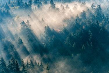 USA12629AW United States, North Carolina, Jackson County. Sunlight through evergreen trees in the Great Smoky Mountains near Bear Ridge Gap, Blue Ridge Parkway.