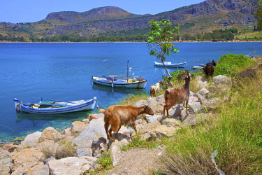 GR06527 Karathona Beach, Nafplio, Argolis, The Peloponnese, Greece, Southern Europe