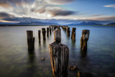 ARTRAU000088 Wooden posts of pier ruins in sea, Patagonia