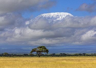KEN11230 Kenya, Amboseli, Kajiado County.  Snow-capped Mount Kilimanjaro.
