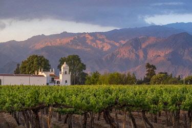 HMS3202911 Argentina, Salta province, Cafayate, Valles Calchaquies, Sheraton Hotel, Bodega El Esteco, a winery and vineyard in Cafayate