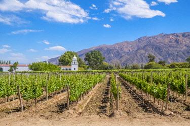 HMS3202964 Argentina, Salta province, Cafayate, Valles Calchaquies, Sheraton Hotel, Bodega El Esteco, a winery and vineyard in Cafayate