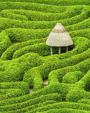 ENG15764AW Garden Maze, Glendurgan Gardens, Falmouth, Cornwall, England