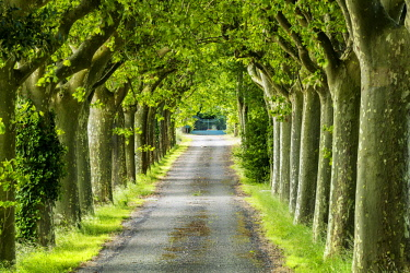 FRA10400AW Tree-lined Road, near Carcassonne, Occitanie, France