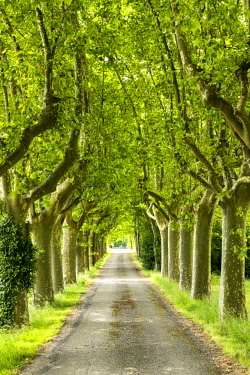 FRA10402AW Tree-lined Road, near Carcassonne, Occitanie, France