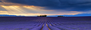 FRA10419AW Sun Rays Over Field of Lavender, Valensole Plateau, Provence, France