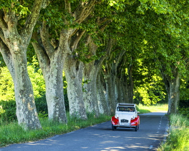 FRA10424AW Classic Citroen 2CV on Tree-lined Road, Provence, France