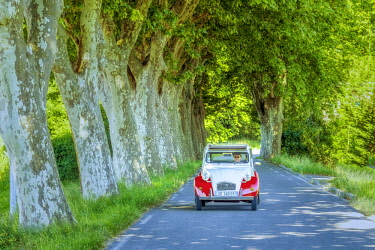 FRA10425AW Classic Citroen 2CV on Tree-lined Road, Provence, France