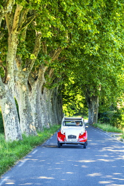 FRA10426AW Classic Citroen 2CV on Tree-lined Road, Provence, France