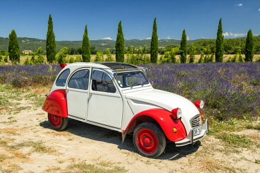 FRA10427AW Classic Citroen 2CV by Field of Lavender, Provence, France
