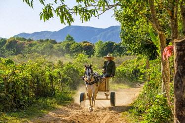 HMS3048764 Cuba, Pinar del Rio province, Vinales, Vinales national park, Vinales valley, a UNESCO World Heritage site, farmer in his horse-cart