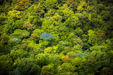 HMS2476652 France, Guyana, French Guyana Amazonian Park, heart area, canopy flowers in the rainy season (aerial view)