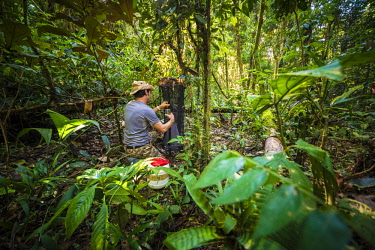 HMS2476675 France, Guyana, French Guyana Amazonian Park, heart area, Mount Itoupe, rainy season, an entomologist installs a trap fermented Apats to capture insects and butterflies in the forest summit clouds (83...