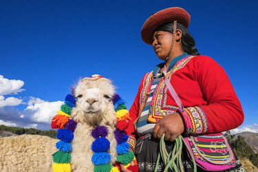 HMS2356784 Peru, Cusco Province, Cusco, listed as World Heritage by UNESCO, woman with traditional dress and its alpaca in the Inca site of Sacsayhuaman