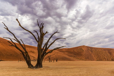 NAM6582AW Africa, Namibia, Sossusvlei area. Dead vlei with rain clouds