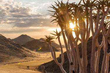 NAM6591AW Africa, Namibia, Namib Rand area. Farm Kanaan. Sunset in the Tiras mountains with a Quiver Tree