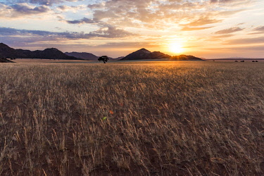 NAM6594AW Africa, Namibia, Namib Rand area. Farm Kanaan. Landscape of the Tiras mountains at sunset