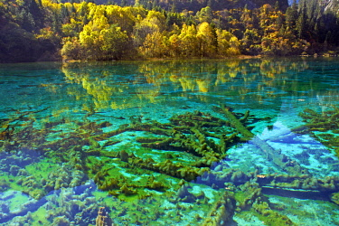 China, Sichuan province, Jiuzhaigou National Park listed as World Heritage by UNESCO, Five flower Lake