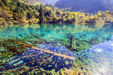 China, Sichuan province, Jiuzhaigou National Park listed as World Heritage by UNESCO, Colorful lake