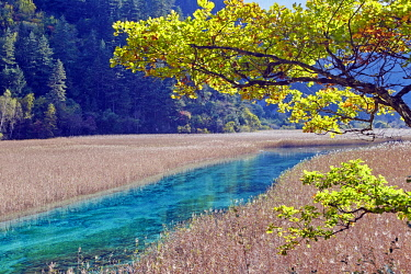 HMS2617932 China, Sichuan province, Jiuzhaigou National Park listed as World Heritage by UNESCO, river coming from the Reed lake