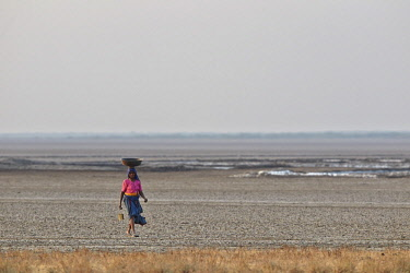 HMS2187997 India, Gujarat state, Little Rann of Kutch, Wild Ass Sanctuary, woman in the dry area