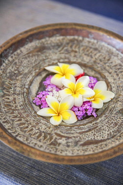 HMS3167106 India, Goa, Coco beach, frangipani flowers on a metal cup in the luxury hotel Ahilya by the sea