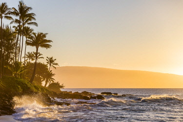 AURTOFA000266 Scenic view of palm trees on seashore at sunset, Lahaina, Maui, Hawaii, USA