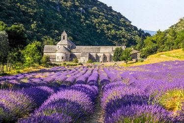 FRA10436AW France, Provence Alps Cote d'Azur, Haute Provence, Cistercian monastery of Senanque beside lavender fielddes: Abbay Notre-Dame de Sénanque