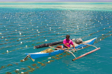 HMS3167239 Philippines, Palawan, Roxas, Green Island Bay, Johnson Island, man taking care of his seaweed farm