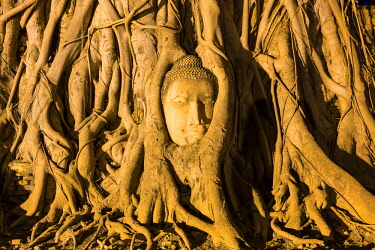HMS3042851 Thailand, province of Phra Nakhon Si Ayutthaya, Ayutthaya, listed as World Heritage by UNESCO, Historical Park, Wat Mahathat
